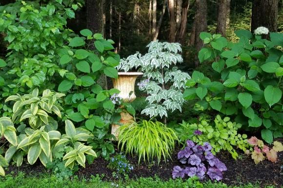 Kerry Ann Mendez garden photo