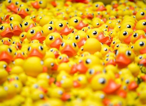 AUGUST 13 |�KOTO Duck Race